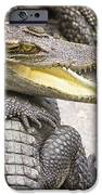 Group Of Crocodiles IPhone Case by Jorgo Photography - Wall Art Gallery