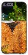Hay Bales IPhone Case by Todd A Blanchard