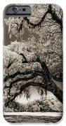 Historic Drayton Hall In Charleston South Carolina Live Oak Tree IPhone Case by Dustin K Ryan
