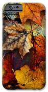 I Love Fall 2 IPhone 6s Case by Joanne Coyle
