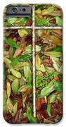 In The Fall IPhone Case by Deborah Montana