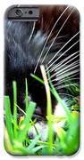 In The Grass IPhone 6s Case by Jai Johnson