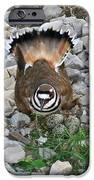 Kildeer And Nest IPhone Case by Douglas Barnett