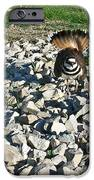 Killdeer 3 IPhone Case by Douglas Barnett