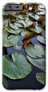 Lake Plant IPhone Case by Svetlana Sewell