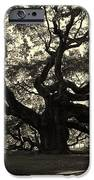 Last Angel Oak 72 IPhone Case by Susanne Van Hulst