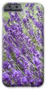 Lavender IPhone Case by Frank Tschakert