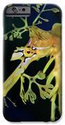 Leafy Sea Dragon IPhone 6s Case by Mariola Bitner