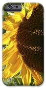Life Is Good IPhone Case by Jane Autry