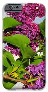 Lilacs IPhone Case by Catherine Reusch  Daley