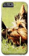 Little Dog IPhone Case by Angela Doelling AD DESIGN Photo and PhotoArt