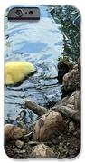 Little Ducky IPhone Case by Angelina Vick