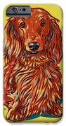 Long Haired Dachshund IPhone Case by Nadi Spencer