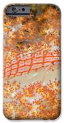 Longnose Hawkfish IPhone Case by Dave Fleetham - Printscapes