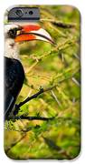 Male Von Der Decken's Hornbill IPhone Case by Adam Romanowicz