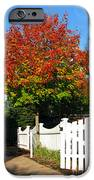 Maple And Picket Fence IPhone 6s Case by Olivier Le Queinec