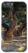 Mastic Tree   IPhone Case by Emmanuel Panagiotakis