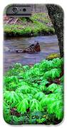 May-apples And Middle Fork Of Williams River IPhone Case by Thomas R Fletcher