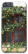 Mission Window With Yellow Flowers IPhone Case by Carol Groenen