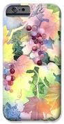 Napa Valley Morning 2 IPhone Case by Deborah Ronglien