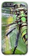 Natural Stained Glass IPhone Case by Carol Groenen