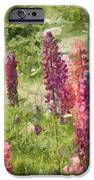 Nova Scotia Lupine Flowers IPhone Case by Jeff Kolker