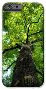 Old Growth IPhone Case by David Lee Thompson