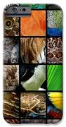One Day At The Zoo IPhone Case by Michelle Calkins