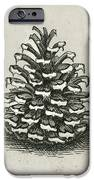 One Pinecone IPhone Case by Charles Harden
