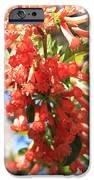 Orange Trumpet Flower IPhone Case by Carol Groenen