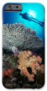 Palau, Diving IPhone Case by Dave Fleetham - Printscapes