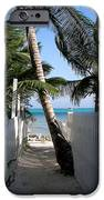 Palm Alley IPhone Case by Karen Wiles