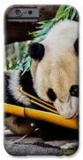 Panda Bear IPhone Case by Robert Bales