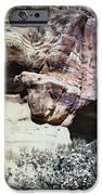 Petra, Transjordan: Cave IPhone Case by Granger