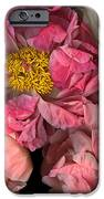 Petticoats IPhone Case by Christian Slanec