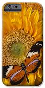 Pretty Butterfly On Sunflowers IPhone Case by Garry Gay
