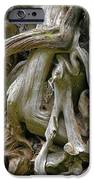 Quinault Valley Olympic Peninsula Wa - Exposed Root Structure Of A Giant Tree IPhone Case by Christine Till