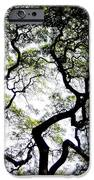 Reach For The Sky IPhone Case by Karen Wiles