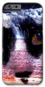 Sandy Paws IPhone Case by Clayton Bruster