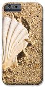 Sandy Shell IPhone Case by Jorgo Photography - Wall Art Gallery