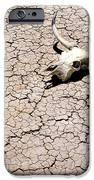 Skull In Desert 2 IPhone Case by Kelley King