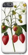 Strawberry IPhone Case by Granger