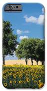 Sunflower Field 2 IPhone 6s Case by SK Pfphotography
