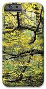 Swamp Birch In Autumn IPhone Case by Thomas R Fletcher