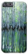 Swamp In Louisiana IPhone Case by Ester  Rogers