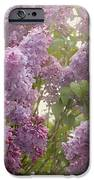 Swimming In A Sea Of Lilacs IPhone Case by Cindy Garber Iverson