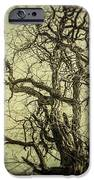The Haunted Tree IPhone Case by Lisa Russo