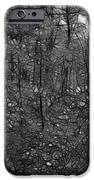 Thoreau Woods Black And White IPhone Case by Lawrence Christopher