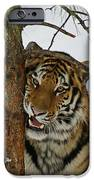 Tiger 3 IPhone Case by Ernie Echols