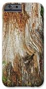 Trees On The Trails - Olympic National Park Wa IPhone Case by Christine Till